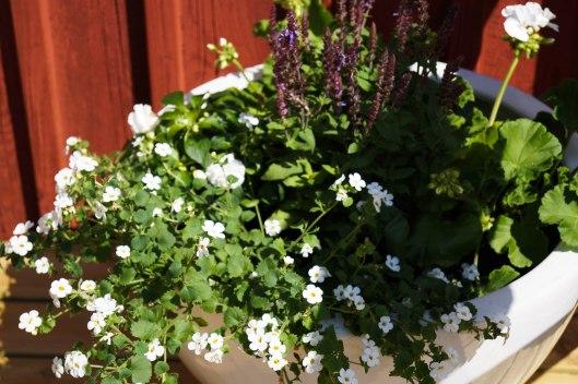 Blommor på altanen-2