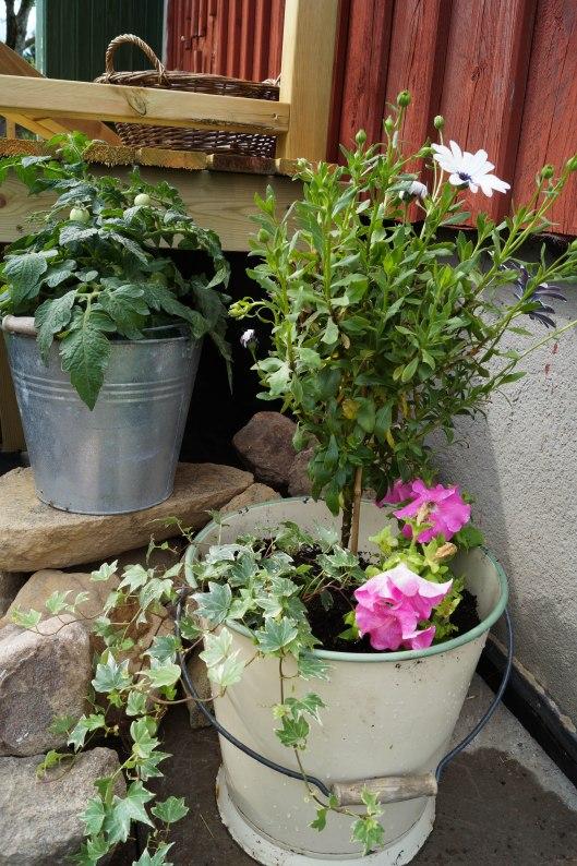 Blommor på altanen-4
