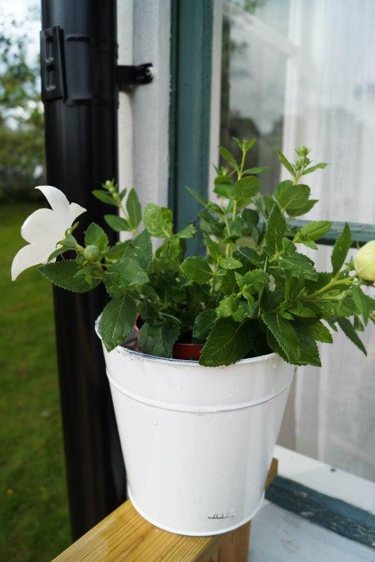Blommor på altanen
